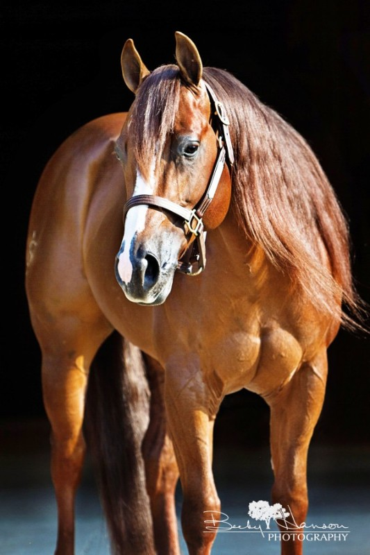 My American Express >> National Reined Cow Horse Association One Fine Vintage at ...