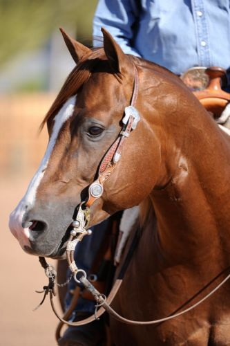 silver spurs equine smoking whiz at perfect horse auctions